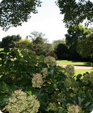 Garden-080